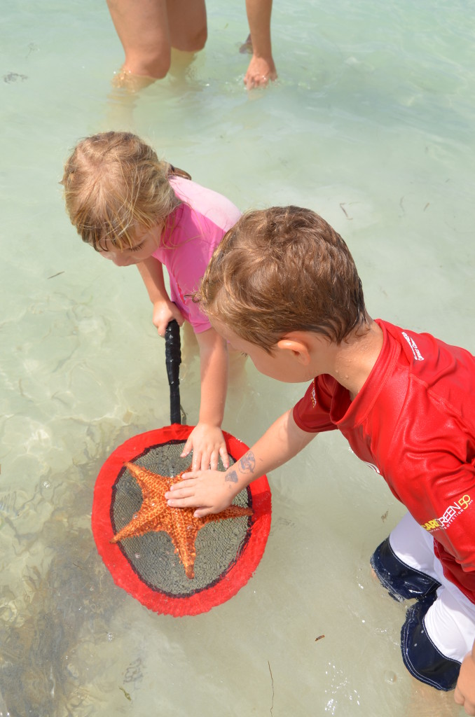 Starfish Point in Grand Cayman