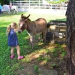 Grand Cayman Equestrian Center