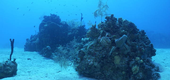 Underwater views near Eden Rock in Grand Cayman