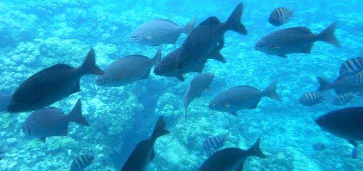Nautilus Undersea Tour in Grand Cayman