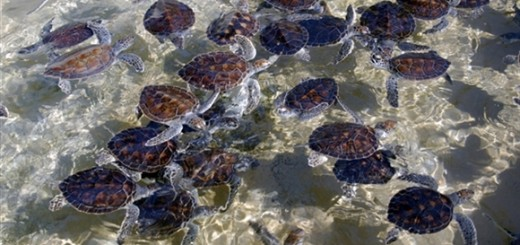 Cayman Islands Turtle Farm