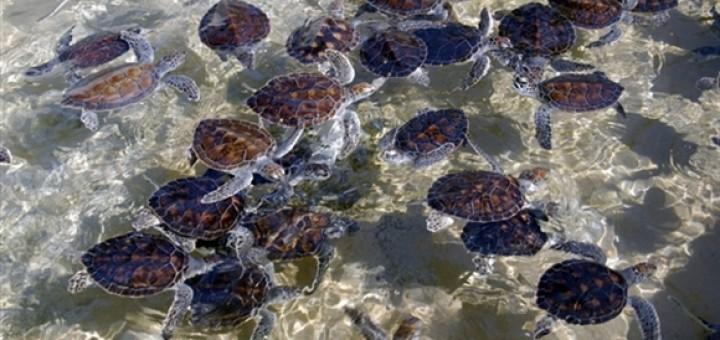 Cayman Islands Turtle Farm